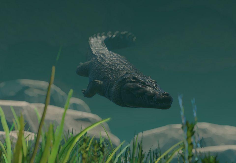 cocodrilo marino nadando