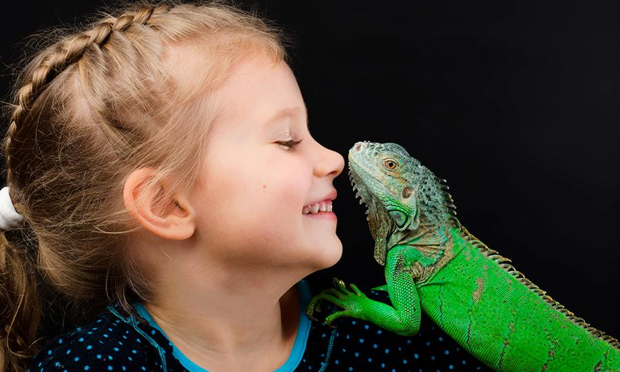 cuidado reptiles