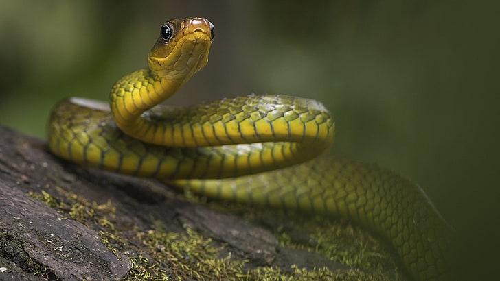 serpiente mamba de jameson
