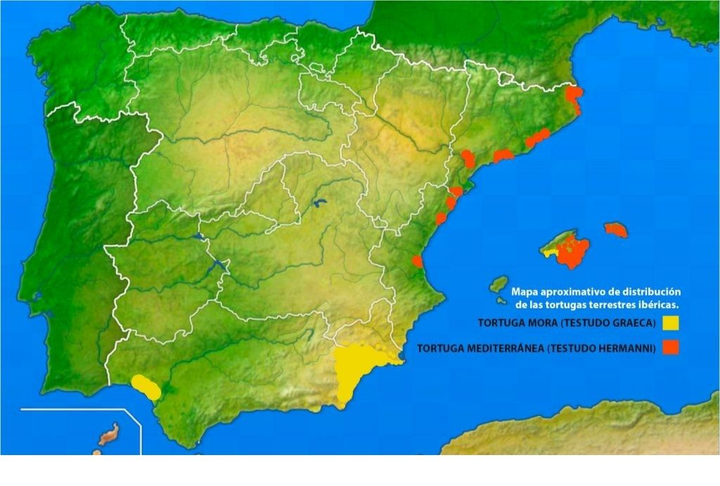 mapa tortuga mora y tortuga mediterranea