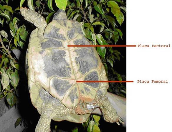 parte trasera caparazon tortuga mediterranea
