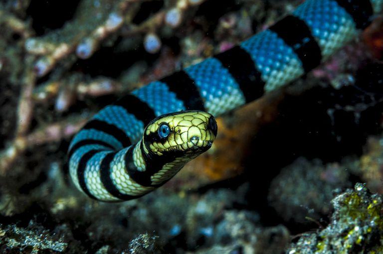 serpiente marina