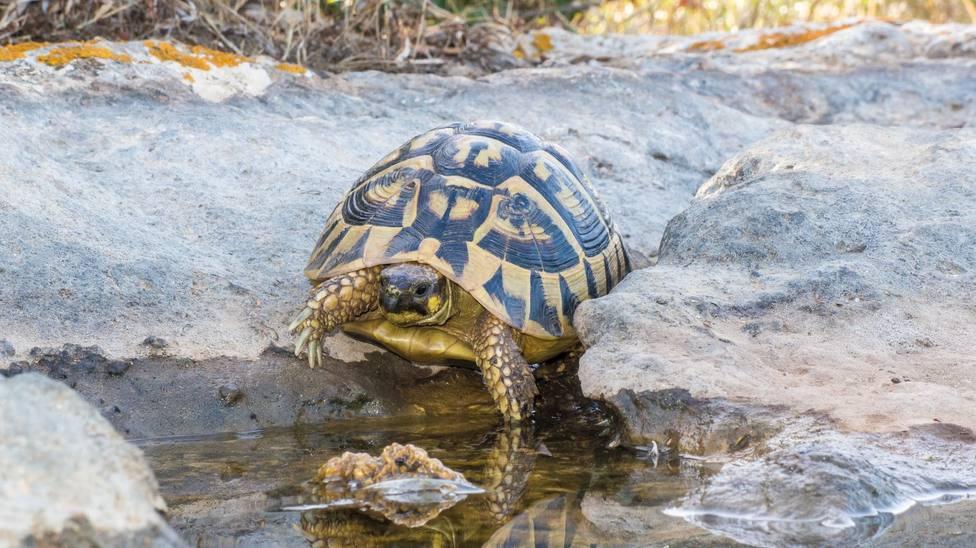 tortuga mediterranea cerca del agua