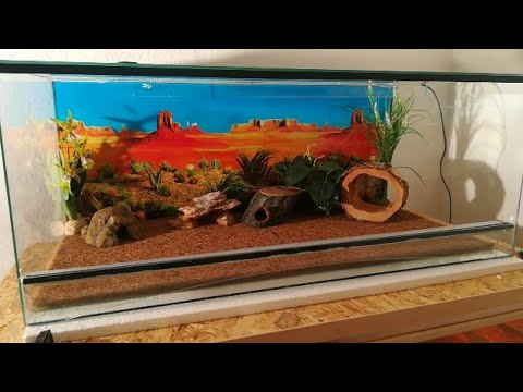 terrario para geckos