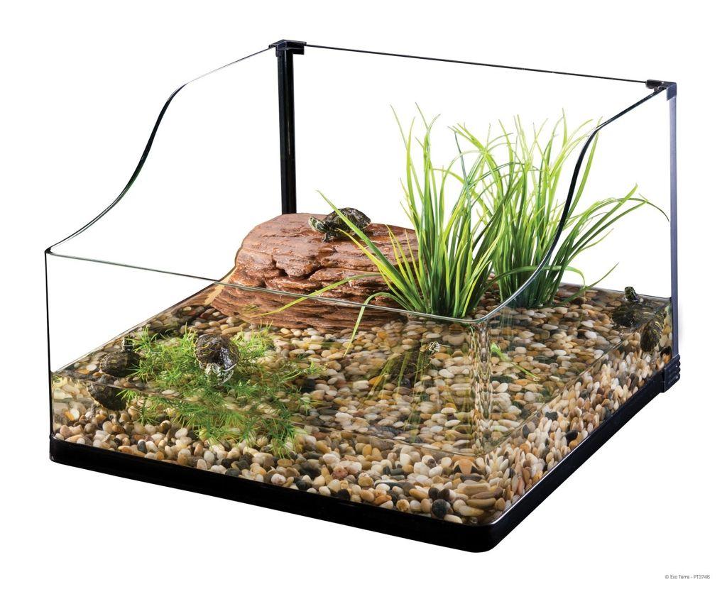 decoracion terrario tortugas agua
