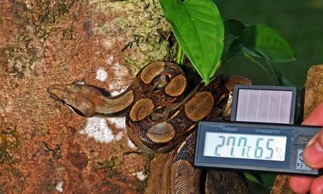 serpientes temperatura humedad