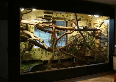 terrario para iguanas