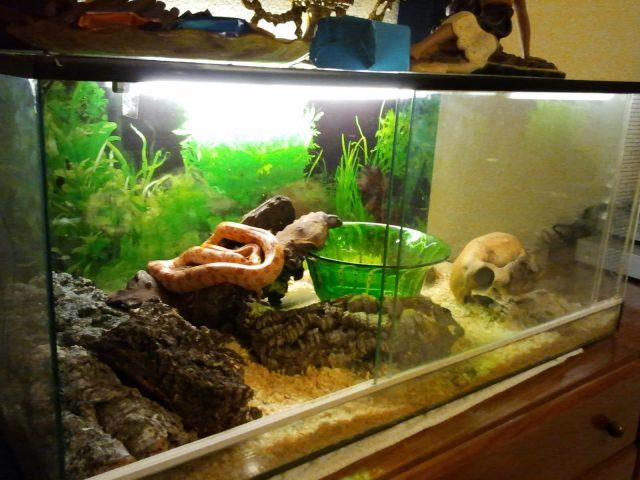 terrario para serpientes