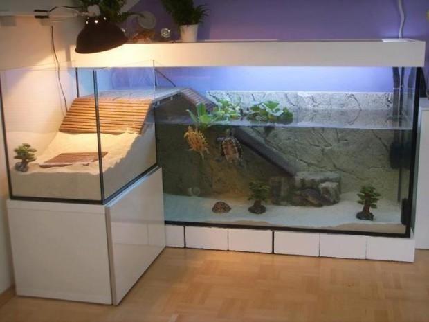 terrario tortugas agua